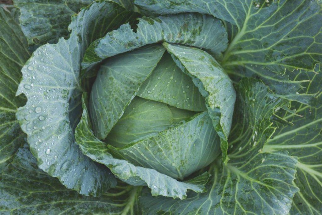 ekim ayı sebzeleri nelerdir: lahana